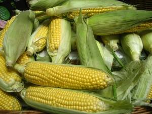 King of Corn